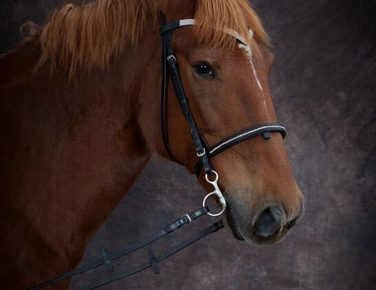 Horse Portrait photo - Auckland