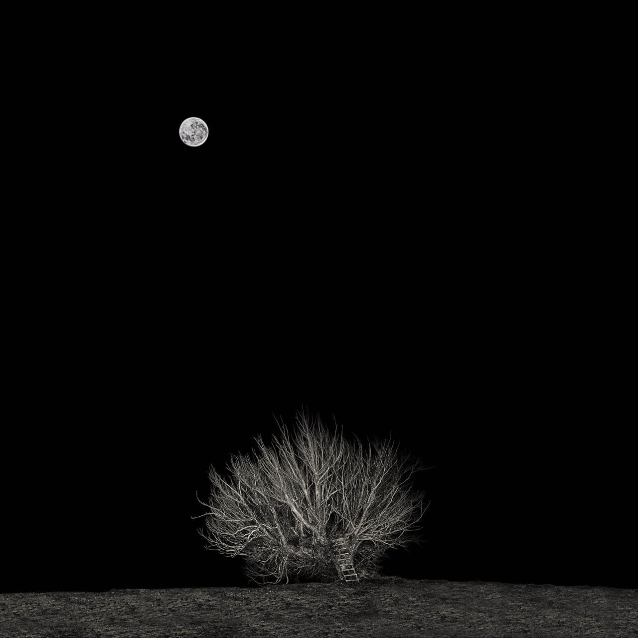 Willow Tree and Moon